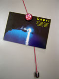 Steely Dan  【カードホルダー/150cm】レッド